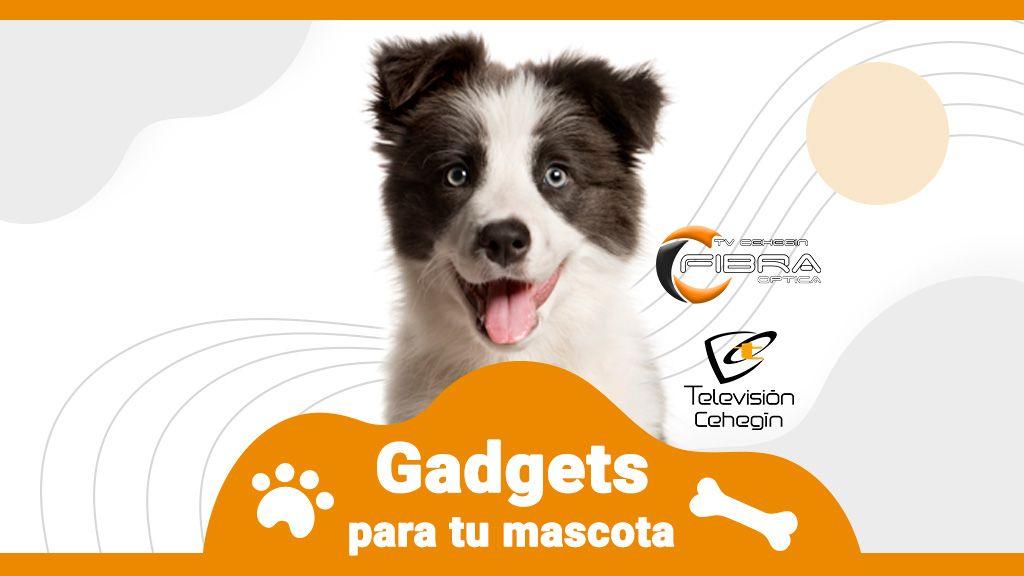 gadgets-para-tu-mascota